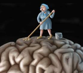 cervello scopa